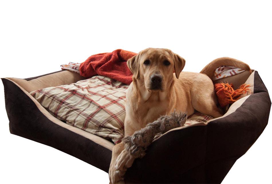 Cuccia divano british per cani taglia grande arredo e for Recinto per cani taglia grande