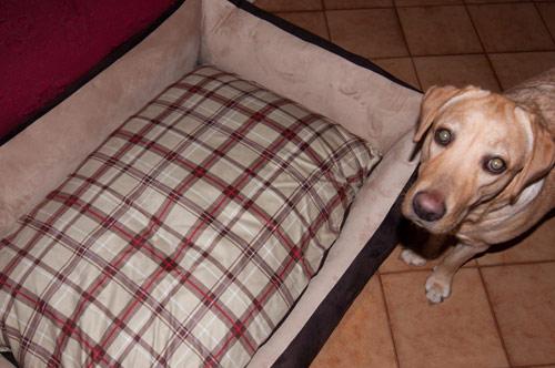 Divano per cane dobermann sfoderabile arredo e corredo for Cucce da interno per cani taglia grande