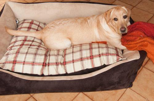Divano per cane border collie sfoderabile arredo e corredo for Cuccia cane ikea prezzo